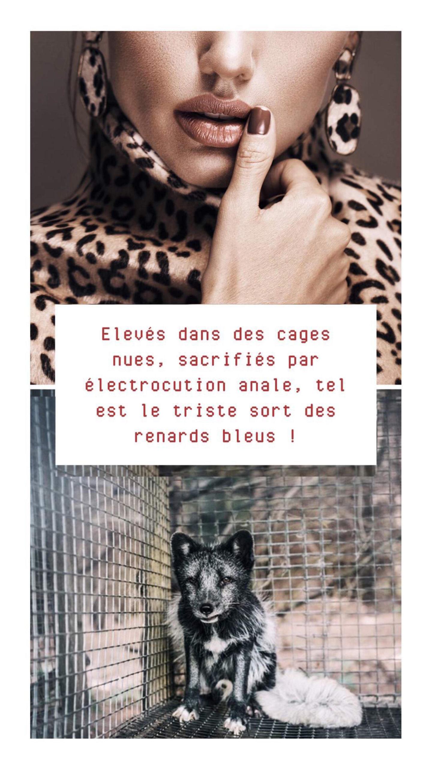 CATALOGUE-CAMPAGNE-ANTI-FOURRURE-page-7