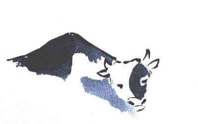 WebArtivisme : La vie d'une vache…